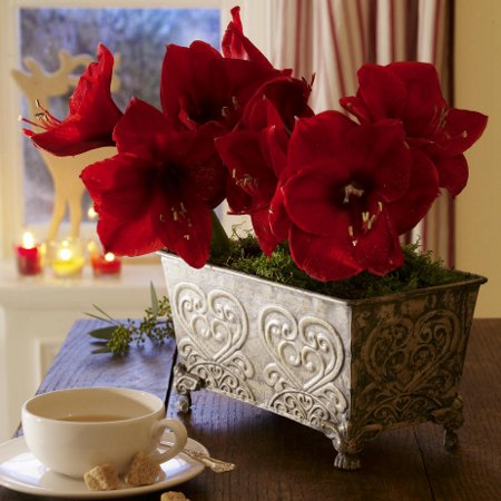 last-minute-diy-christmas-decorations-amaryllis-metall-container