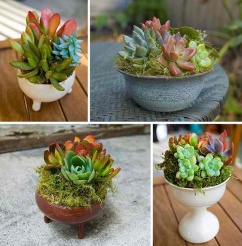 Flowers-fresh-air-at-home-diy-masters-com-2014-009