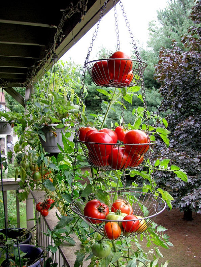 ideas-for-gardening-narrow-balconies-19