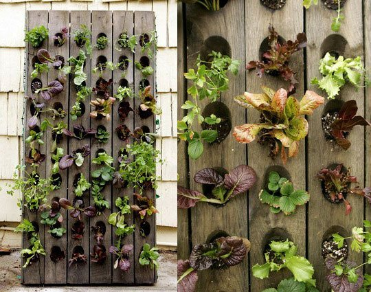 ideas-for-gardening-narrow-balconies-4