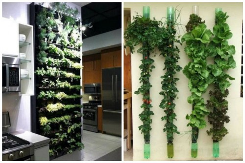 vertical-garden-the-magic-of-the-green-wall-img003